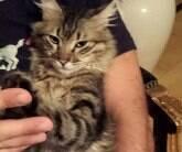 Gato desaparecido anda 140 km e volta para casa