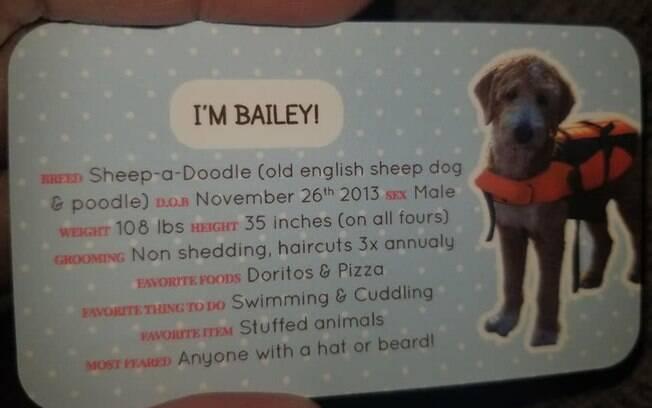 Especificações de cão