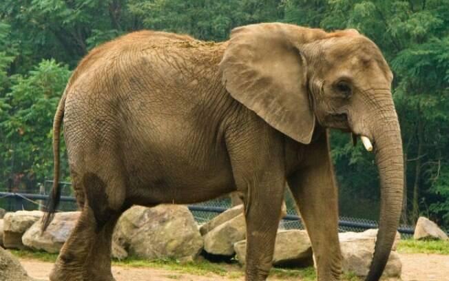 Conheça os maiores animais do mundo e surpreenda-se com o tamanho desses bichos