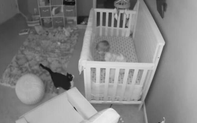 Gato fofo e bebê conversando