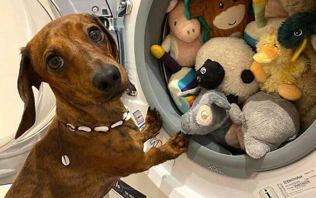 Salsicha monitorando seus brinquedos