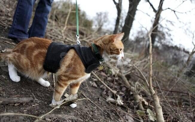 Número crescente de especialistas recomenda coleiras para gatos