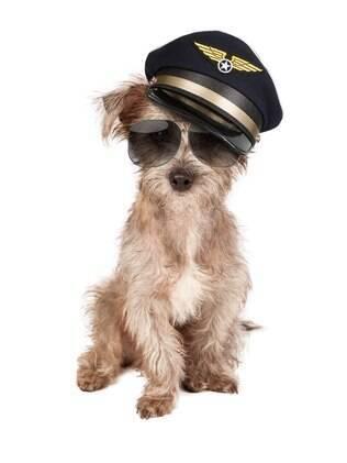 Alguns passos devem ser seguidos para que a viagem de avião com cachorro seja segura