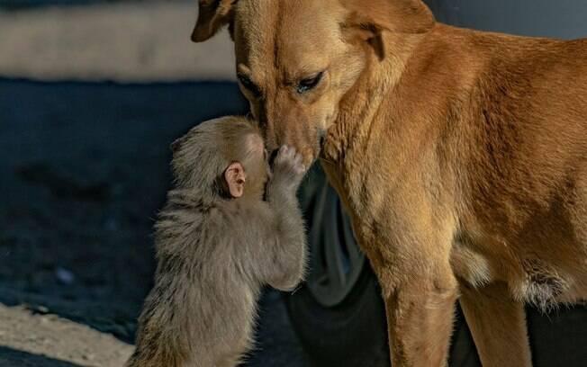 Em gesto maternal, cachorra grávida acolhe filhote de macaco