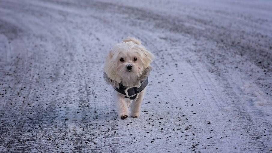 É importante saber se a temperatura do destino da viagem é seguro para o animal