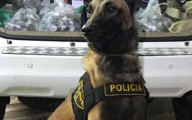 Canil da PM apoiou operação da Força Tática em São Paulo