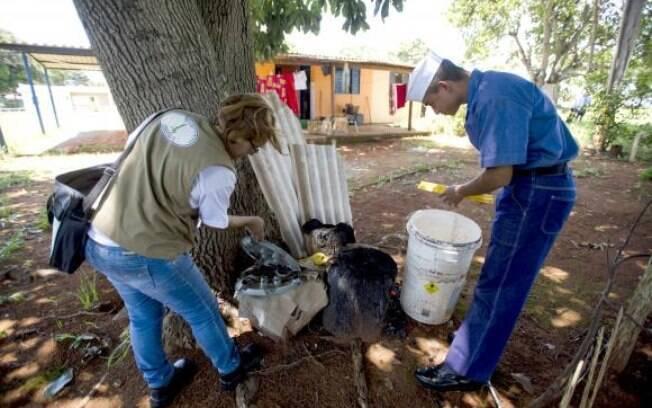 Dia Nacional de Mobilização para o Combate ao Aedes aegypti: governo federal tenta encabeçar campanha para minimizar efeitos da epidemia