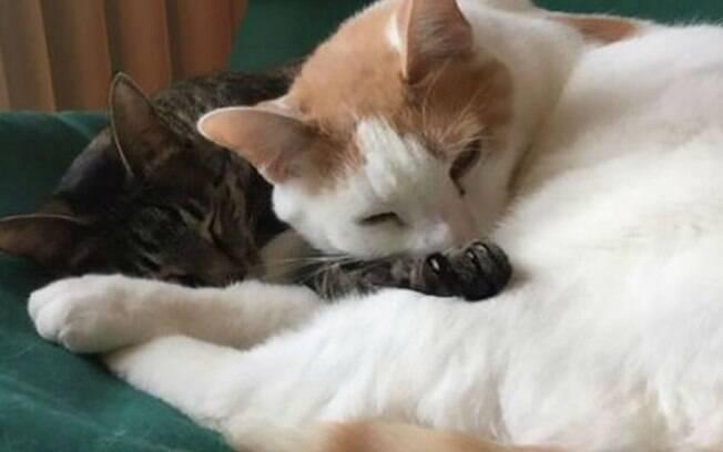 Felix e seu irmão Gus