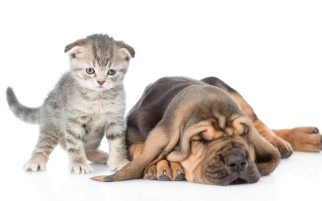 Cães e gatos não são contaminados com a febre amarela