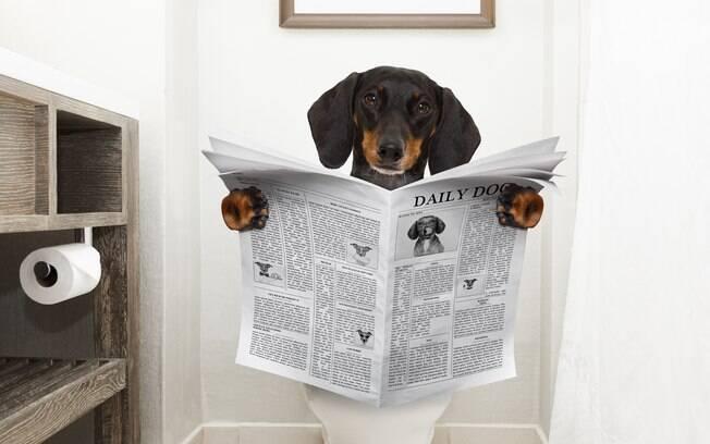 Quando o pet fica muito tempo sem evacuar ou faz isso com dificuldade, provavelmente está sofrendo de prisão de ventre canina