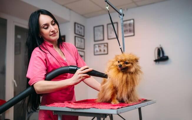 A toalha não é suficiente para deixar a pelagem completamente seca, por isso o uso do secador para cachorro é indicado