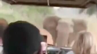 Elefante persegue carro com turistas em safári