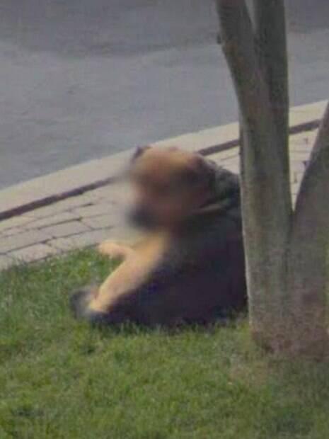 cachorro na grama registrado pelo google street view