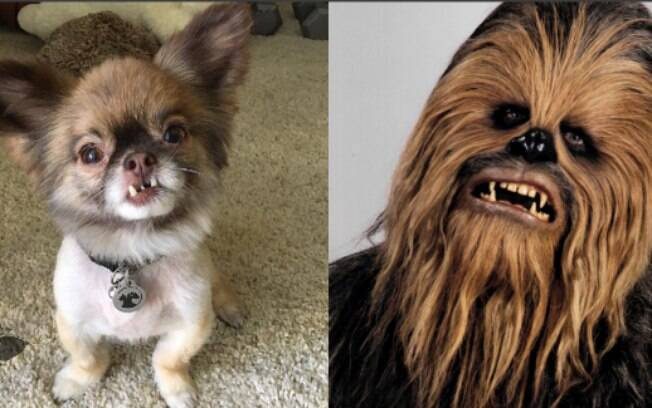 O cãozinho Chewbacca é muito parecido com o guerreiro do filme Star Wars
