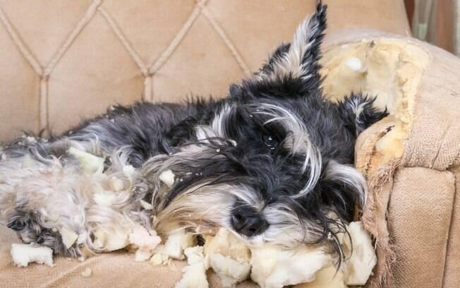 Conheça algumas dicas para evitar que seu cão destrua os móveis e objetos da casa