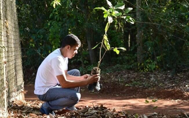 Projeto Gênesis vai plantar 3,5 mil espécies nativas até abril