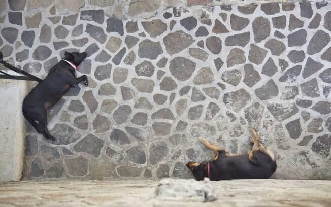Juddy e Ana, dois dos três cachorros residentes do hotel Firefly