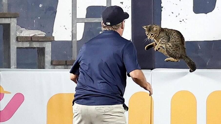 A gatinha fez sucesso entre a equipe adversaria dos Yankees