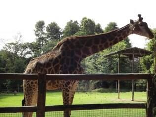 Ana Raio tinha 12 anos e vivia no zoológico da capital desde 2004