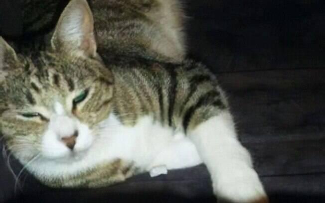Max, o gato doméstico que rouba jornal do vizinho