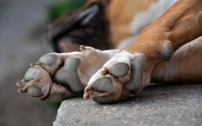 Normalmente, as patinhas dianteiras do cachorro são constituídas por cinco dedos, enquanto as traseiras se restringem a apenas quatro. Quando o cão nasce com cinco no pé traseiro, é considerado uma má formação genética
