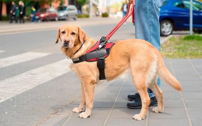 Um colete peitoral pode auxiliar o seu cachorro durante o passeio