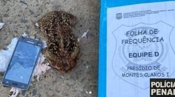 Celular é encontrado dentro de sapo que foi jogado em presídio
