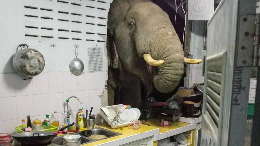 Elefante invadiu casa em busca de comida