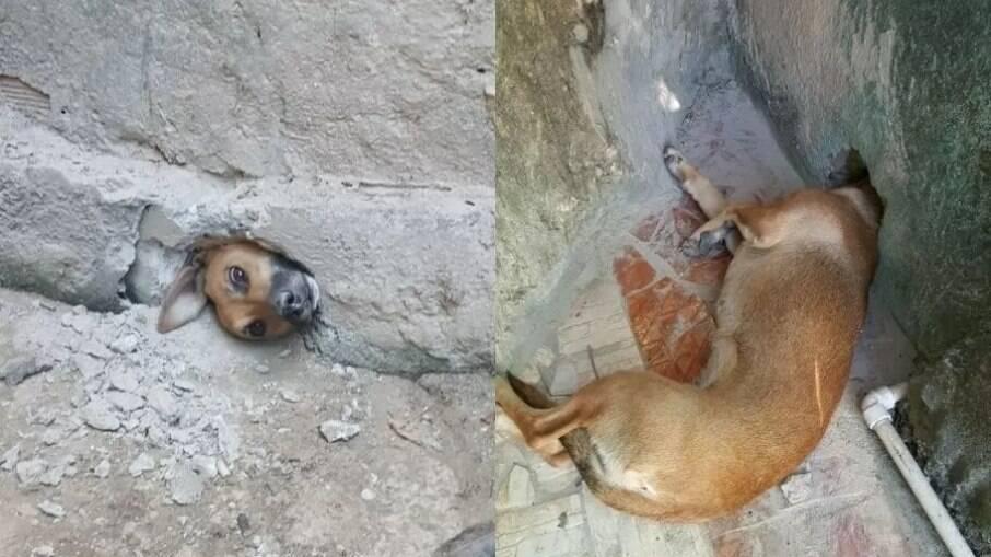 Cachorro caramelo é resgatado pelo Corpo de Bombeiros