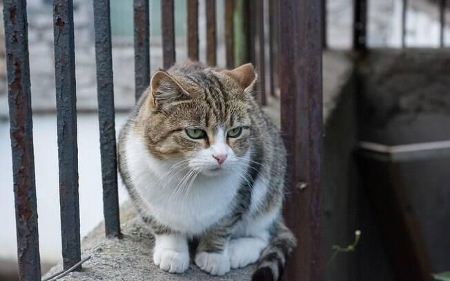 Apesar de suas 7 vidas, as doenças de gato podem ser muito ruins para os bichanos