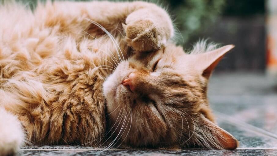 Gatos se lembram de quando foram deuses no Egito e viram febre nas redes sociais