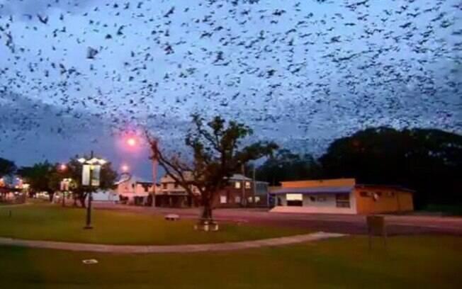 Invasão de morcegos de