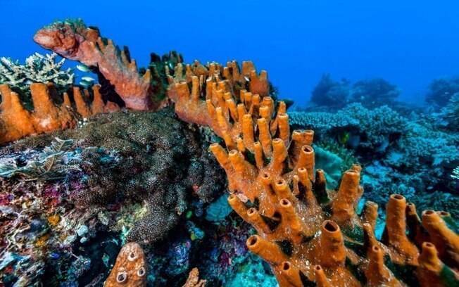 Criatura marinha tem uma cabeça e centenas de ânus, diz estudo