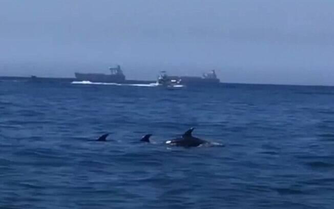 Golfinhos na praia do Leme
