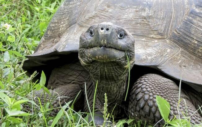 A evolução da tartaruga ainda é um quebra-cabeças a ser desvendado por cientistas, que se animaram com a descoberta