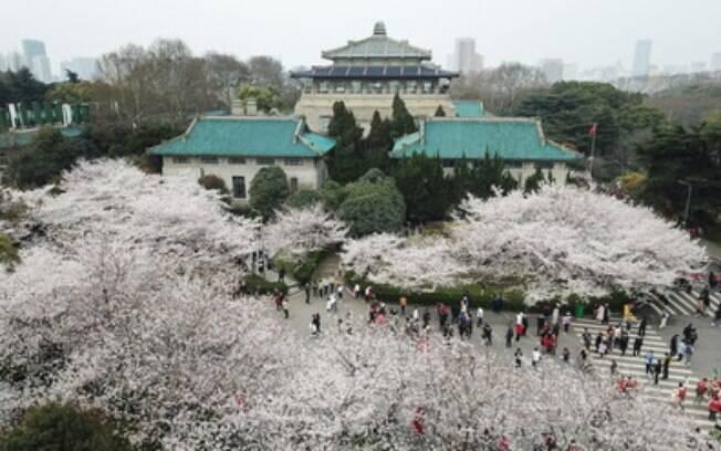 Macarrão quente e seco, a Torre do Grou Amarelo e perspectivas brilhantes: Wuhan estende o convite a visitantes e investidores globais