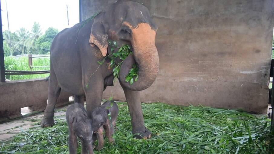 Gêmeos comendo ao lado da mãe