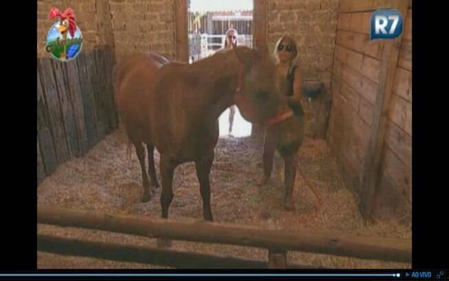 Peoas podem tomar punição por deixar a égua entrar com capresto no estábulo