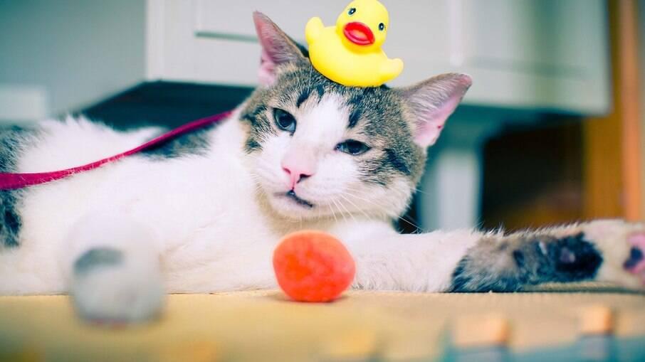 É comum dos gatos se higienizarem por conta própria