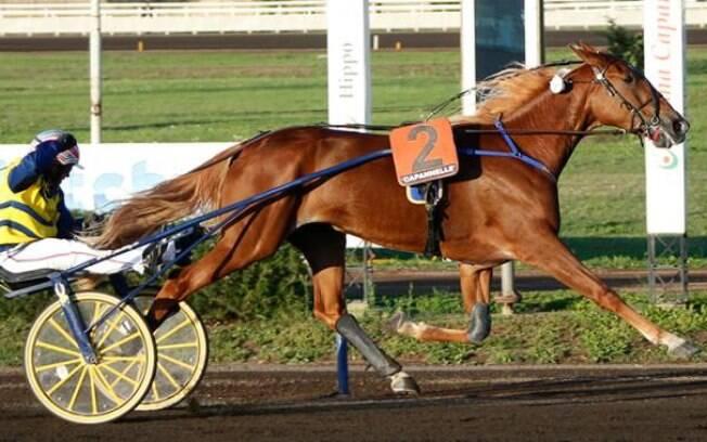 Vampire Dany foi um dos cavalos roubados na Itália