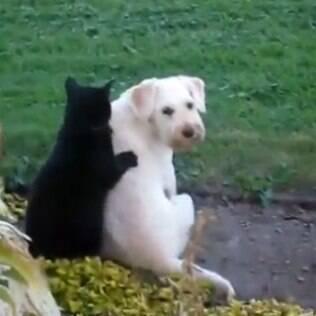 Dono registra cena de carinho explícito entre seus pets