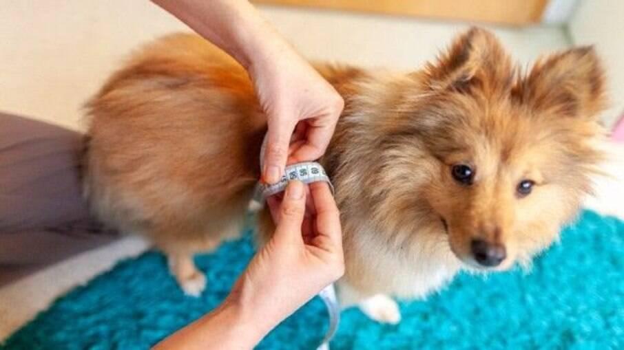 Assim como os seres humanos, os cães também podem sofrer com diabetes