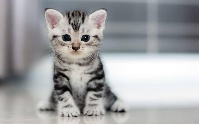 O gato filhote precisa de cuidados especiais com a alimentação