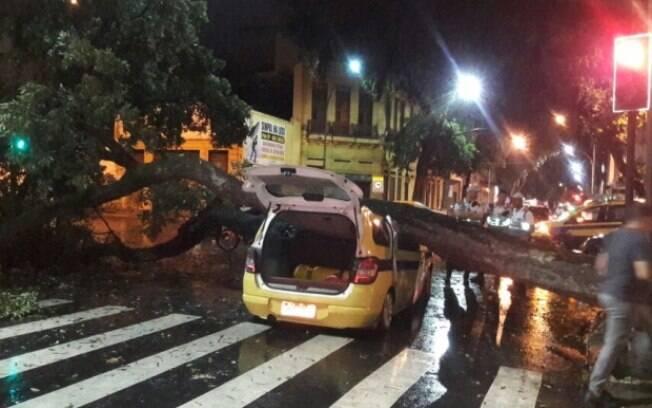Temporal durante madrugada de quinta causou caos; mais de 800 ocorrências de queda de árvores foram atendidas