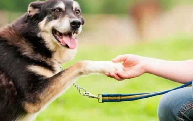 O adestramento inteligente é a melhor opção para ensinar o cachorro a fazer xixi no lugar certo