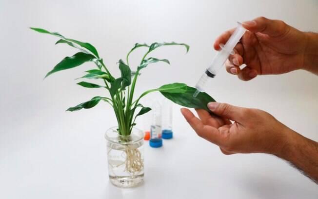 Experimentos buscam criar botânica que auxilie humanos nas tarefas do dia a dia