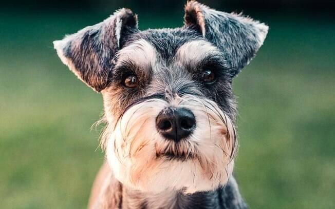 Dia dos animais: rezas de cura, proteção e gratidão aos pets