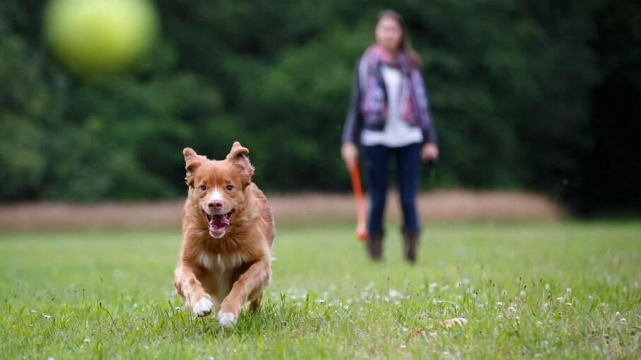 Quando levar o pet para passear, é importante manter o distanciamento de humanos e outros animais
