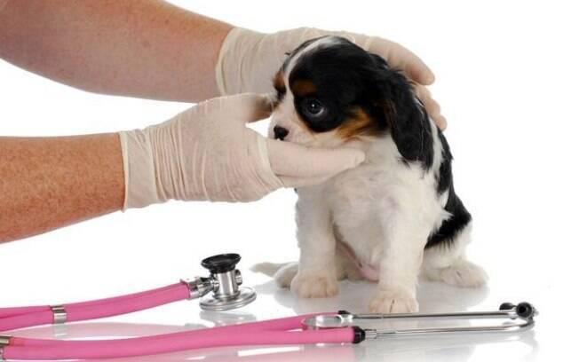 É importante observar o comportamento do pet e os sinais clínicos apresentados para identificar a leucemia