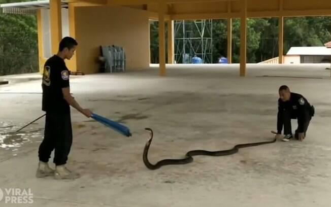 Animal tentou resistir às ações dos profissionais.